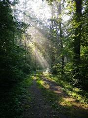 IMG_20190825_094607 (eduard43) Tags: sonne sun nebel fog 2019 wald forest licht light