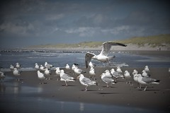 one has to make the start (Ba Tas) Tags: animals beach birds water coast