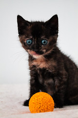 Queely (Divine Feline Photography) Tags: cat cats kitty animal photography canon animals feline felinephotography animalphotography catphotography canonphotography kitten