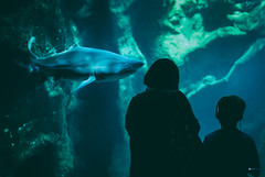 Encounter (Whizz45) Tags: animals aquarium fish indoors nature poissons sharks travel water france mother son headphones rocks