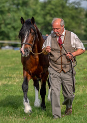 Welsh Section D (sho5572) Tags: northamptonshire blakesley 2019 summer august horseshow countryshow horse outdoors outdoor pony bay welshsectiond inhandshowing