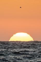 Testing - Sigma 150-600 (27 of 30) (Quentin Biles) Tags: 150600 c ca california contemporary d850 nikon pg pacificgrove sigma sunset