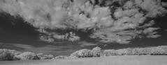 Trees on the Common (IanAWood) Tags: 720nminfrared chorleywood digitalinfrared hertfordshire nikkorafs1224mmf4gdx nikond70ir thechilterns walkingwithmynikon