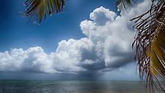 Storm at the shore (Classicpixel (Eric Galton) Photography Portfolio) Tags: cloud nuage storm tempête sea mer océan tropical tropiques coconut cocotier tree arbre caribbean caraïbes ciel sky bleu blue turquoise wind vent ericgaltn ericgalton classicpixel olympus mexico mexique