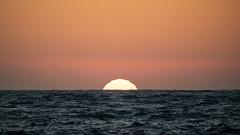 Testing - Sigma 150-600 (28 of 30) (Quentin Biles) Tags: 150600 c ca california contemporary d850 nikon pg pacificgrove sigma sunset