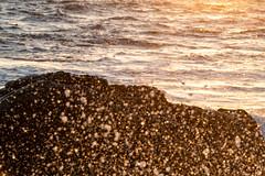 Testing - Sigma 150-600 (12 of 30) (Quentin Biles) Tags: 150600 c ca california contemporary d850 nikon pg pacificgrove sigma sunset