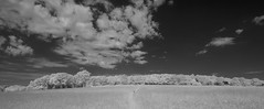 Clouds over the Common (IanAWood) Tags: 720nminfrared chorleywood digitalinfrared hertfordshire nikkorafs1224mmf4gdx nikond70ir thechilterns walkingwithmynikon