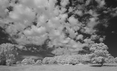 Clouds and trees on the Common (IanAWood) Tags: 720nminfrared chorleywood digitalinfrared hertfordshire nikkorafs1224mmf4gdx nikond70ir thechilterns walkingwithmynikon