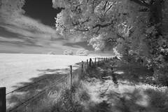 Walking in the Shade (IanAWood) Tags: 720nminfrared chorleywood digitalinfrared hertfordshire nikkorafs1224mmf4gdx nikond70ir thechilterns walkingwithmynikon