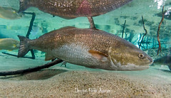 Florida Aquarium - Tampa - Floride (Daryshoot) Tags: floridaaquarium tampa floride daryshoot usa america sony sonyilce7rm3 aquarium poisson fish