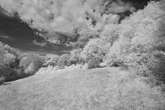 Trees and Clouds on the Common (IanAWood) Tags: 720nminfrared chorleywood digitalinfrared hertfordshire nikkorafs1224mmf4gdx nikond70ir thechilterns walkingwithmynikon