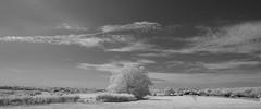 Hight of the sun (IanAWood) Tags: 720nminfrared chorleywood digitalinfrared hertfordshire nikkorafs1224mmf4gdx nikond70ir thechilterns walkingwithmynikon