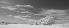 Farmland and clouds (IanAWood) Tags: 720nminfrared chorleywood digitalinfrared hertfordshire nikkorafs1224mmf4gdx nikond70ir thechilterns walkingwithmynikon