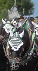 Rosstag (CA_Rotwang) Tags: bayern bavaria germany deutschland rottach egern horse pferde tracht tradition krachlederne dirndl lederhose reiter rider equestrian tegernsee fest parade umzug kutsche carriage coach