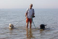 Me and the hounds (alasdair massie) Tags: labrador wash alasdair sea snettisham black dog vizsla beach norfolk seaside pasha scarpa me uk