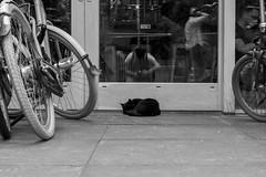 Slumber (TheIzzz) Tags: amsterdam the netherlands europe travel urban fuji fujifilm fujilove xt100 mirrorless monochrome black white stayokay vondelpark cat sleeping animal bikes reflection hostel still life