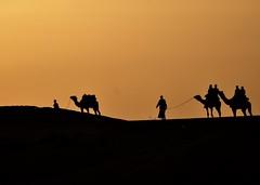 A Wonderful Desert Morning (The Spirit of the World ( On and Off)) Tags: thardesert desert desertlandscape desertscene dunes sanddunes camel camels camelrider guides sun sunlight sunrise light rajasthan india asia silhouettes