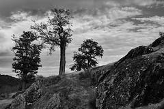 Sobrevivir. (jcof) Tags: sierra aracena sierrahuelva arboles trees riscos rocas castillo nubes clouds paisaje landscape blancoynegro blackandwhite