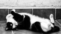 Tola (Egg2704) Tags: gato gatos cat cats felino feline felinos felines animal mamífero naturaleza mascota mascotas pet pets egg2704 bw bn byn monochrome blancoynegro blackandwhite blackwhite monocromo