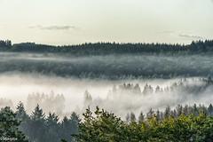 19082019-DSC_0037 (vidjanma) Tags: taverneux arbres brume forêt matin