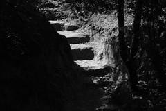 Old Steps (Gene Ellison) Tags: rock steps stairs worn old dirt wall woods secluded blackwhitephotos bw fujifilm acrosg sooc