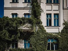 2019-08-25-153457 (Schmidtze) Tags: building berlin fenster pflanze haus stadt architektur ausflug farbe gebäude prenzlauerberg spaziergang altbau berlinpankow kopenhagenerstrase olympusm25mmf18 olympusepl9 deutschland wohnhaus