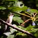 Backyard hummer