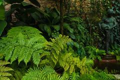 Farne (KaAuenwasser) Tags: botanischergarten karlsruhe garten farne farn grün pflanzen blätter blatt figur wasser tropisch exotisch gewächshaus