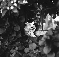 Dog Daze of Summer (BunnySafari) Tags: garden summer ilford100delta mamiyac3 studio bw twinlens cladcamera test ©bunnysafari film depthoffield fpp
