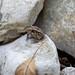 Tiny Frog - West Bouldin Creek Greenbelt