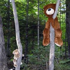 Bears in trees--Explored (yooperann) Tags: toy teddy bears trees gwinn upper peninsula michigan memorial cute
