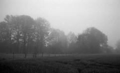 Early morning (Rosenthal Photography) Tags: asa400 kleinbildformat ilfordlc2912920°c9min ff135 analog ilfordhp5 epsonv800 olympustrip35 schwarzweiss frühling ilfordrapidfixer 35mm sommer 20190601 earlymorning morning may spring landscape mood fields trees meadow fog mist olympus olympus35 trip trip35 dzuiko zuiko 40mm f28 ilford hp5 hp5plus lc29 129 14 rapid fixer epson v800