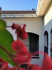 Resort/Home life. (thnewblack) Tags: huaweip30pro leicaoptics smartphone cameraphone flowers apartmentlife britishcolumbia googlephotos depthoffield