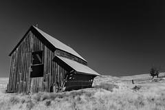 Alone (Ian Sane) Tags: ian sane images alone barn old field rickety tree boyd oregon wasco county monochrome blackwhite landscape photography canon eos 5ds r camera ef1740mm f4l usm lens monochromemonday