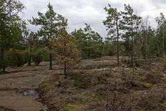 _DSC4823_DxO (Alexandre Dolique) Tags: scandinavie août 2019 sandinavie d850 nikon afs 28300 f3556g ed vr suède sweden sverije tanum