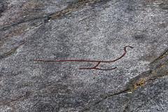 _DSC4824_DxO (Alexandre Dolique) Tags: scandinavie août 2019 sandinavie d850 nikon afs 28300 f3556g ed vr suède sweden sverije tanum