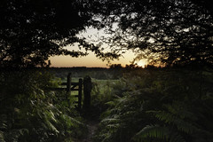 Sunset (explored) (Adin Roberts) Tags: ditchling common sunset field fern trees gate countryside stile