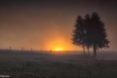 19082019-DSC_0006 (vidjanma) Tags: taverneux arbres brume matin sunrise