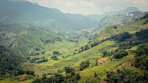 Iconic Sapa rice paddies