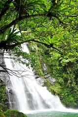 Desing Waterfall (mattlaiphotos) Tags: 鹿谷 南投 德興瀑布 瀑布 waterfall fern river scenery water stream creek nantou lugu taiwan landscape nature