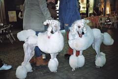 Kodak portra 800 (ruipinadlm1) Tags: street color film dogs nightshot kodak streetphotography streetphoto analogue portra800 kodakportra dogsonfilm