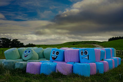 Rural Humour (Lyndon (NZ)) Tags: ilce7m2 sony newzealand nz outdoors farm farming humour funny landscape colour face