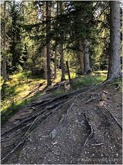 Forêt du Taraveray