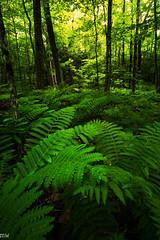 Wachusett Mountain (MikeWeinhold) Tags: wachusetts mountain massachusetts fern forests
