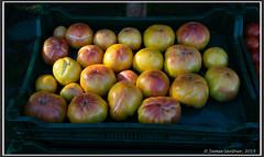 At the Market (James0806) Tags: farmersmarket saunderstown rhodeisland usa tomatoes coastalgrowersfarmersmarket
