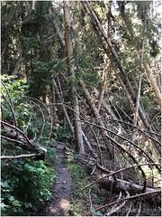 Forêt du Taraverey