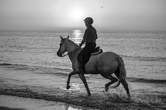 Worth the cycle ride (Drummerdelight) Tags: action seascape seaside horse sunset sunlight dof pov blackwhite