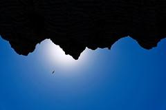 Falaises Etretat mouette (freephysique) Tags: paysage france normandie etretat falaises mouette silhouette soleil bleu ciselé paesaggio francia normandia scogliere gabbiano sole blu inseguito landschaft frankreich klippen möwe sonne blau gejagt landscape la normandy cliffs seagull sun blue chased 景观 法国 诺曼底 埃特尔塔 悬崖 海鸥 侧影 太阳 蓝 追 paisaje normandía acantilados gaviota silueta sol azul perseguido