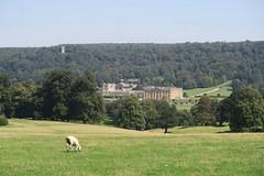 The Peak District, England (nature chief) Tags: uk peakdistrict chatsworth derbyshire sheep nationalpark イギリス ピークディストリクト