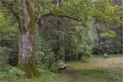 Happy Bench Monday! (Janos Kertesz) Tags: nature forest tree green wood plant outdoor background foliage park natural trunk season summer woods baum bank bayern bavaria forst forstenriederpark